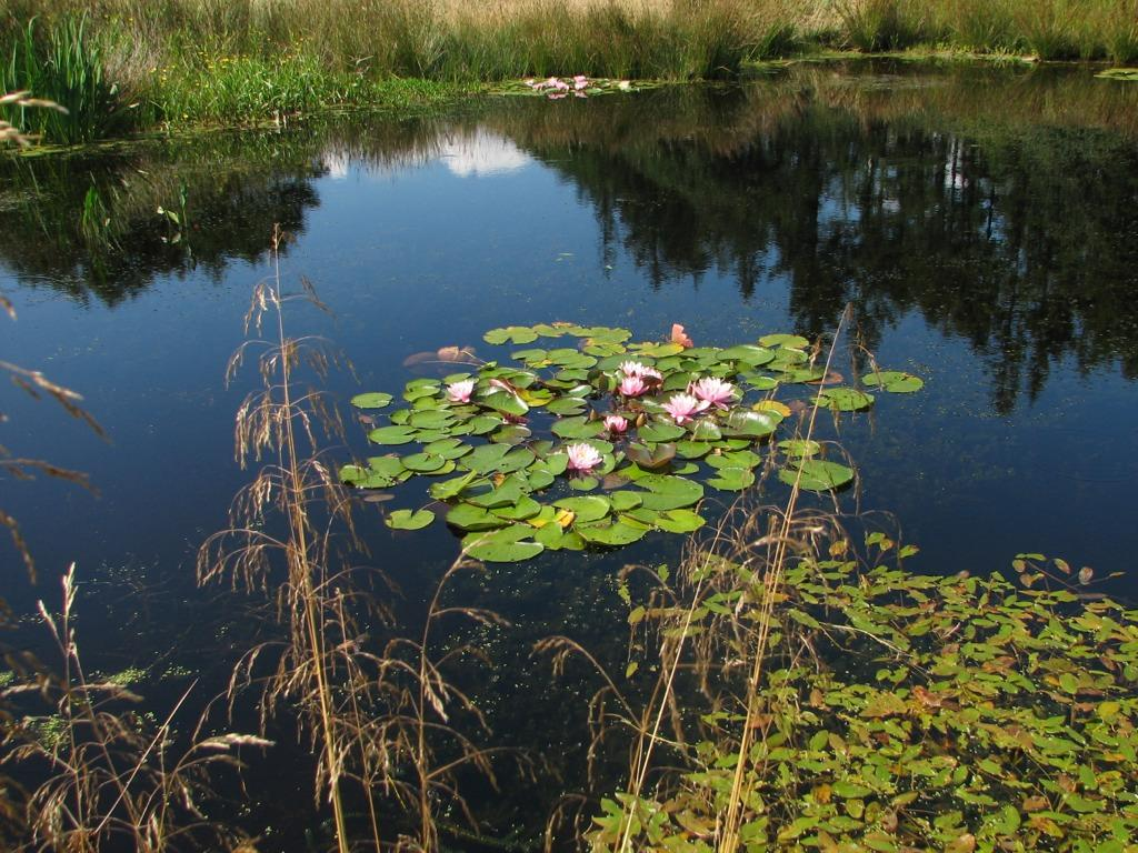 Garden lakes and ponds project cumbria landscape for Landscape gardeners