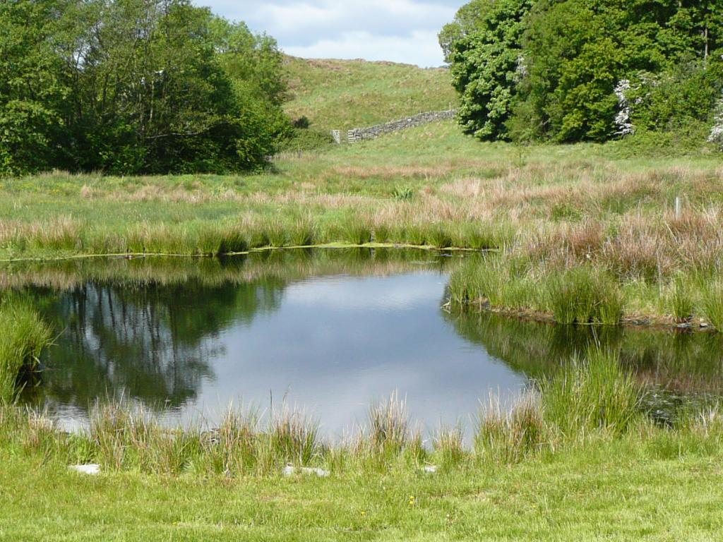 Natural ponds article 1a creating a large natural pond for Build a lake