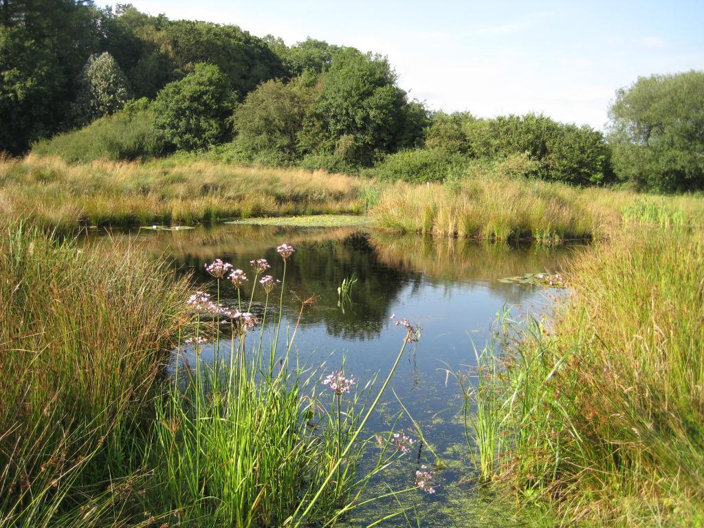 Design elements waterfeatures landscape gardeners cumbria for Wildlife pond design uk